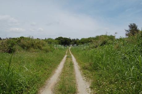 田舎の轍のある一本道の写真素材 [FYI02984765]