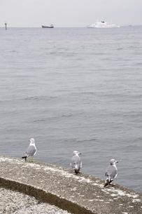 本牧ふ頭からの東京湾の写真素材 [FYI02984901]