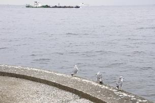 本牧ふ頭からの東京湾の写真素材 [FYI02984903]