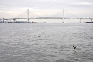 横浜ベイブリッジの写真素材 [FYI02984952]