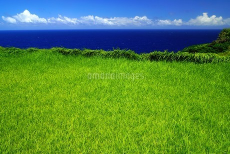 母島の写真素材 [FYI02985167]