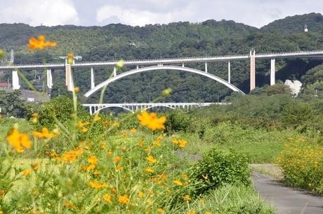 キバナコスモスと新小倉橋の写真素材 [FYI02985218]