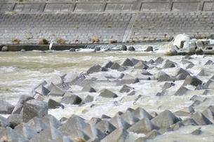 河川の消波ブロックの写真素材 [FYI02985257]