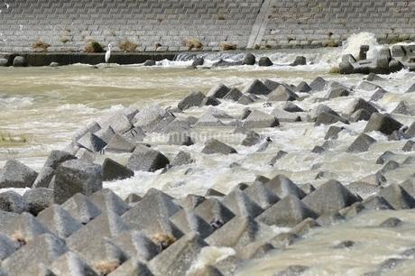 河川の消波ブロックの写真素材 [FYI02985260]