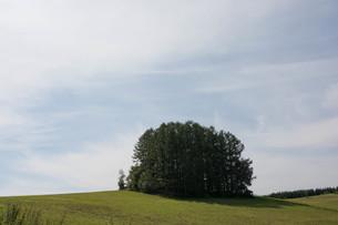 緑の丘の上のカラマツ林 美瑛町の写真素材 [FYI02985285]