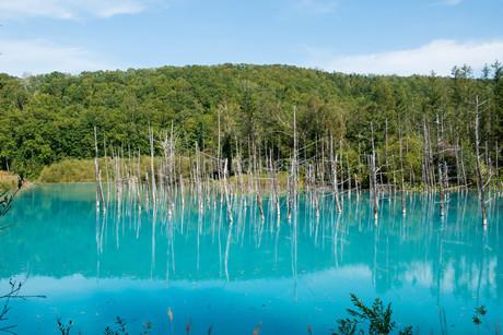 夏の青い池 美瑛町の写真素材 [FYI02985291]