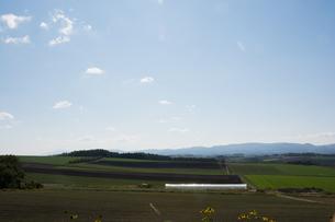 緑の畑作地帯 北海道の写真素材 [FYI02985293]