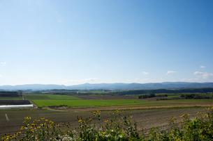 緑の畑作地帯 北海道の写真素材 [FYI02985294]