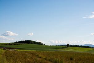 丘陵地帯の畑の写真素材 [FYI02985306]