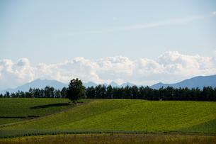 緑の畑とシラカバの木の写真素材 [FYI02985307]
