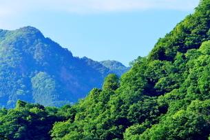 東京の奥多摩山林風景の写真素材 [FYI02985455]