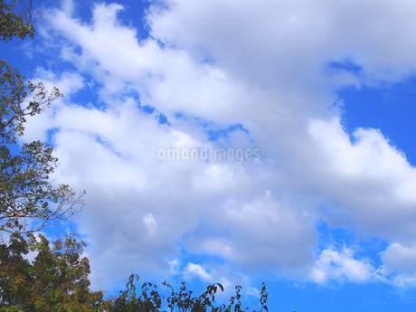 9月の空①の写真素材 [FYI02985459]