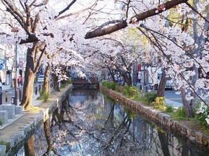 桜~高瀬舟①~の写真素材 [FYI02985462]