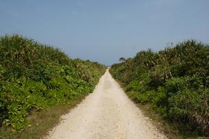 両側が緑の田舎の一本道の写真素材 [FYI02985504]