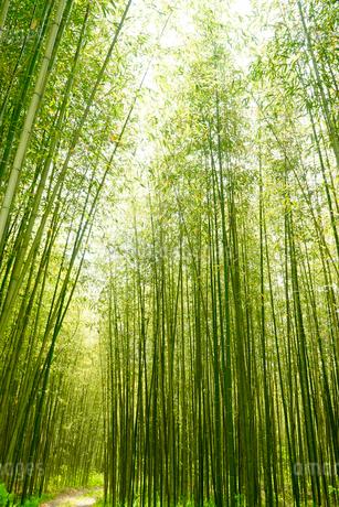 竹林の写真素材 [FYI02985783]