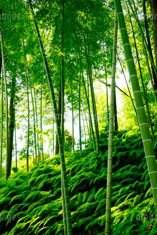 竹林の写真素材 [FYI02985785]