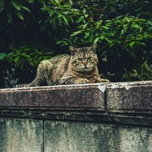 野良猫の写真素材 [FYI02985911]