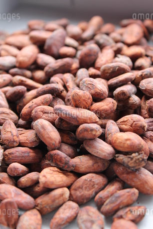 Dry Cacao Beansの写真素材 [FYI02985939]