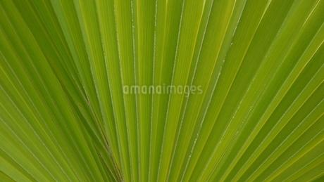 leafの写真素材 [FYI02985954]
