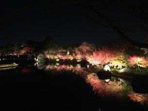 夜景の写真素材 [FYI02986001]