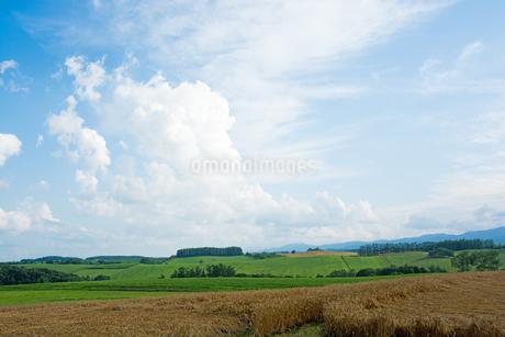夏空と丘陵畑作地帯の写真素材 [FYI02986022]