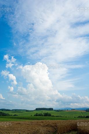 夏空と丘陵畑作地帯の写真素材 [FYI02986023]