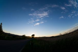 夕暮れの空と大きな木のシルエット 美瑛町の写真素材 [FYI02986028]