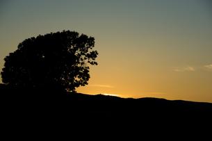夕暮れの空と大きな木のシルエット 美瑛町の写真素材 [FYI02986029]