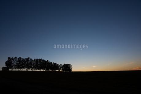 夕暮れの丘 美瑛町の写真素材 [FYI02986030]