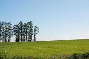 緑のムギ畑と青空 美瑛町の写真素材 [FYI02986034]