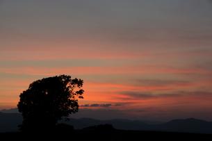 美しい夕暮れの空と大きな木のシルエット 美瑛町の写真素材 [FYI02986039]