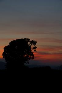 夕暮れの空と大きな木のシルエット 美瑛町の写真素材 [FYI02986040]