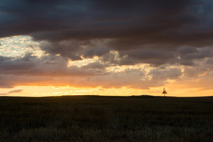 夕焼空とマツの木 美瑛町の写真素材 [FYI02986046]