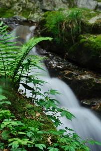 野草の間を流れ落ちる清流の写真素材 [FYI02986065]