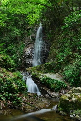 東京都檜原村の払沢の滝の写真素材 [FYI02986067]