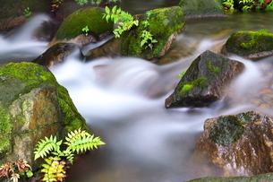 清涼な夏の清流の写真素材 [FYI02986082]