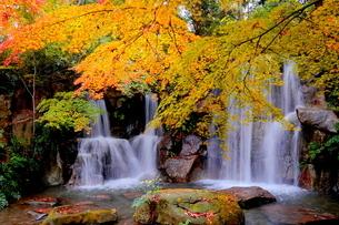 紅葉(黄葉)した秋の滝の写真素材 [FYI02986134]