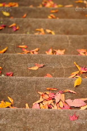 階段の黄葉した落ち葉の写真素材 [FYI02986152]
