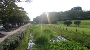 大宰府政庁跡で見た日光の写真素材 [FYI02986197]