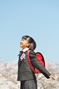 青空で両手を広げる小学生の女の子(桜、ランドセル、卒業)の写真素材 [FYI02986281]
