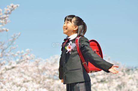 青空で両手を広げる小学生の女の子(桜、卒業、ランドセル)の写真素材 [FYI02986282]