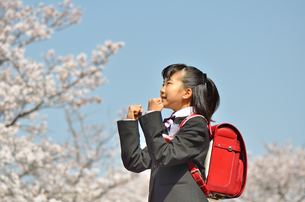 小学校を卒業する女の子(桜、ランドセル)の写真素材 [FYI02986293]