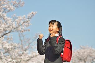 小学校を卒業する女の子(桜、ランドセル)の写真素材 [FYI02986295]