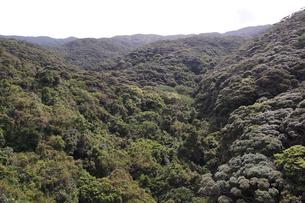 南国沖縄の緑の森の写真素材 [FYI02986310]