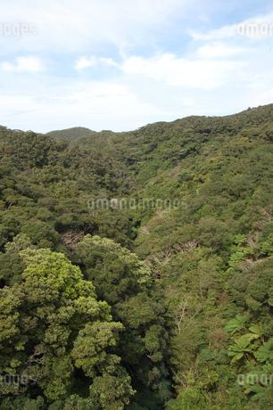 南国沖縄の緑の森の写真素材 [FYI02986311]