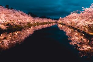 青森県・弘前市・弘前公園の夜桜(弘前さくらまつり)の写真素材 [FYI02986427]
