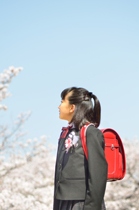 小学校を卒業する女の子(桜、青空、ランドセル)の写真素材 [FYI02986510]