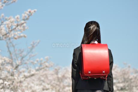 小学校を卒業する女の子(後姿、ランドセル、青空、桜)の写真素材 [FYI02986515]