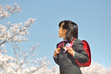 小学校を卒業する女の子(桜、青空、ランドセル)の写真素材 [FYI02986522]