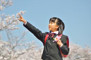 小学校を卒業する女の子(桜、ランドセル、青空)の写真素材 [FYI02986526]
